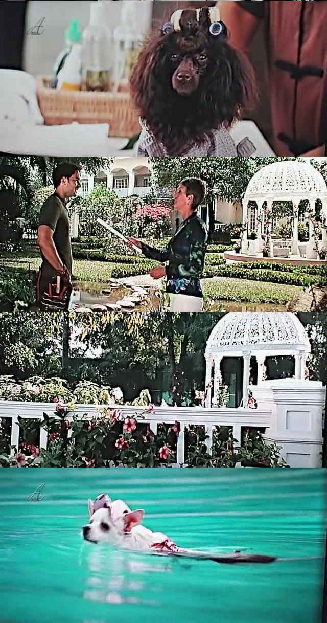 http://lowvaw.bay.livefilestore.com/y1ppdI4kLssRfkm-q6OxzB3MwRQabhZPNXLmMQPBFKTBGNd6OgItkyxyBXsgRaLglEACqeKqYThXqH5dgKtYuWVjA/Chihuahua-Beverly-Hills---Hierro%20copia.jpg